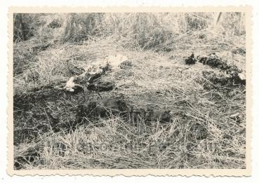 Tote Soldaten