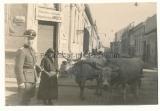 Waffen SS Offizier in Brod Jugoslawien