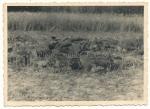 Tote französische Soldaten Frankreich 1940