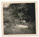 Tote französische Soldaten